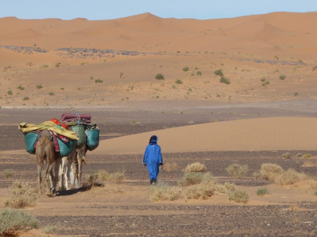 Nomad and camels walking in the desert
